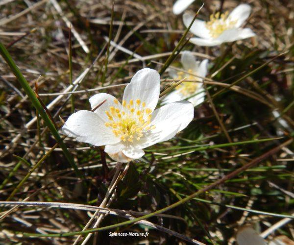 2-anemone-plateau